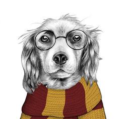 Harry Potter Spaniel