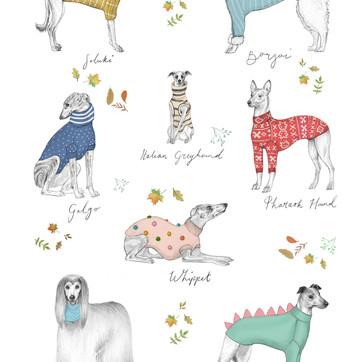 Sighthounds.jpg