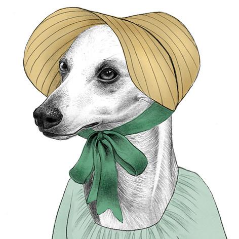 Whippet Elizabeth Bennet