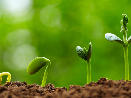 The Seed ( Learning to Build Trust )