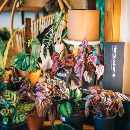 Hot houseplant trends grabbing our attention in 2021