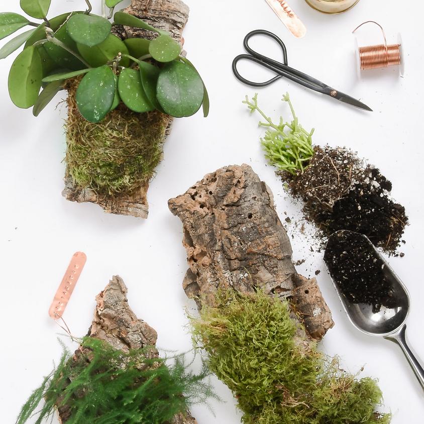 Stylish houseplant mounting workshop