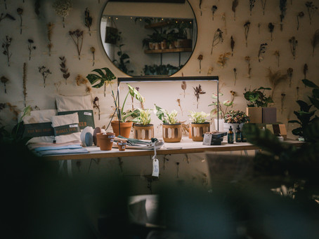 Autumn houseplant care