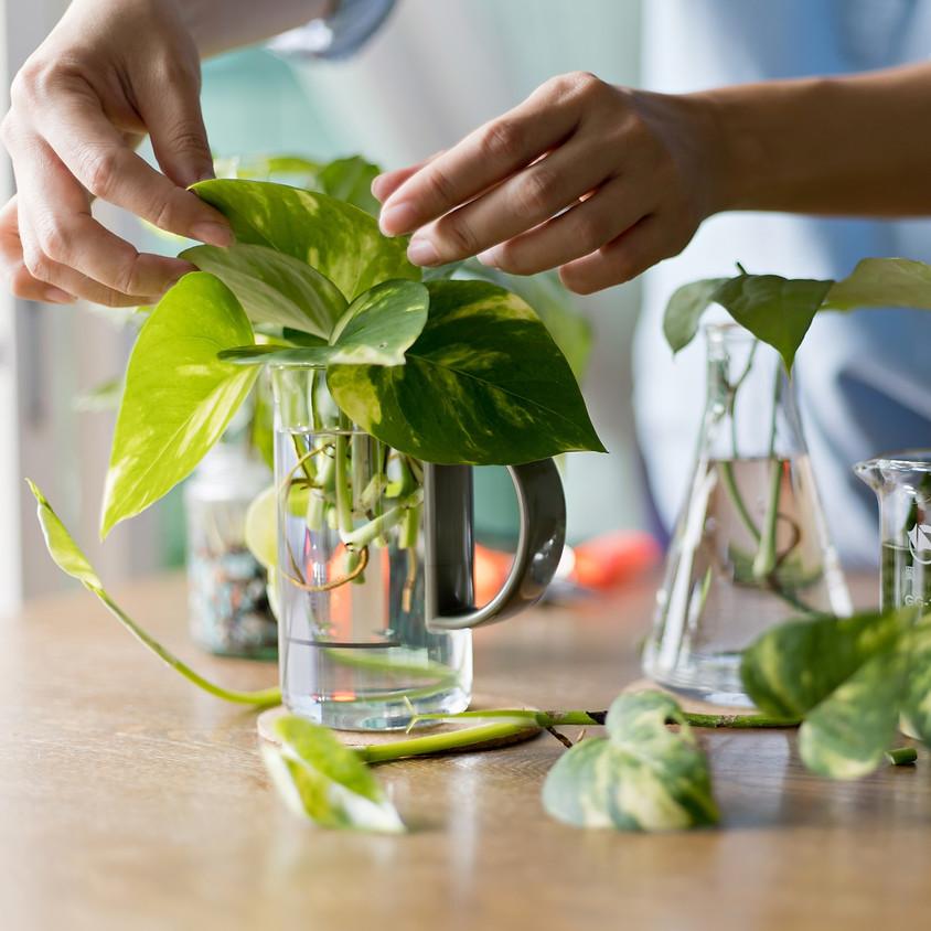 Propagating Houseplants Workshop
