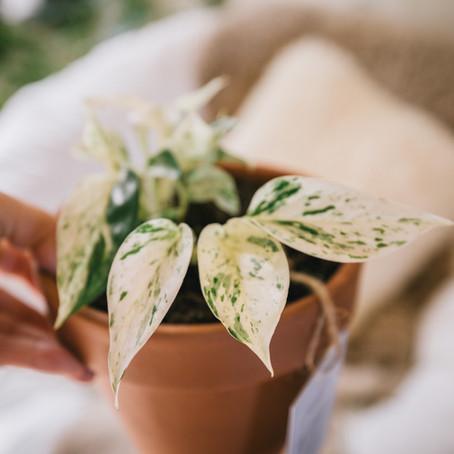 5 common mistakes that newbie plant parents make