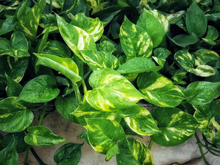 10 houseplants you can't murder (we dare you)