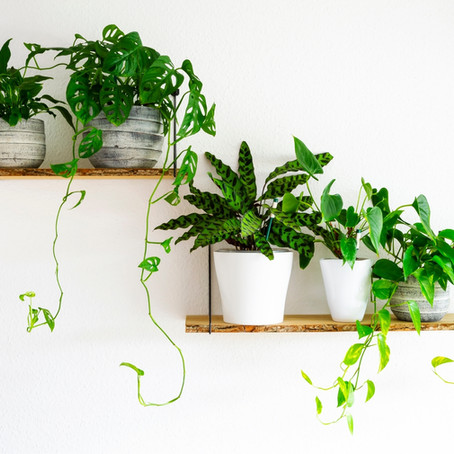 10 of the best trailing plants that will make your shelves look sexy AF