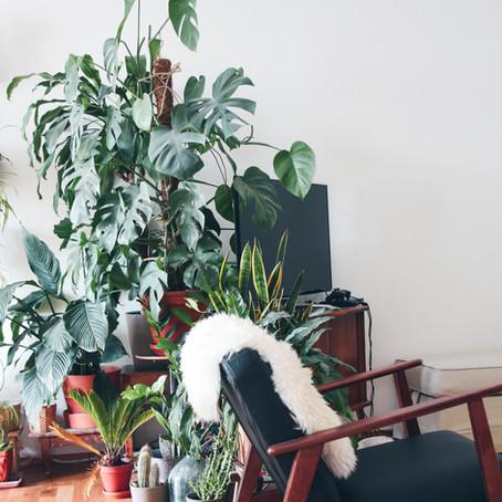 7 big leaf houseplants that make a big statement