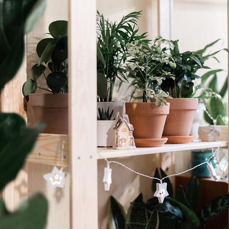 Thriving houseplants workshop