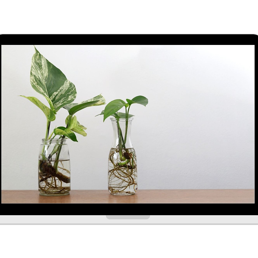 Propagating Houseplants VIRTUAL Workshop 2