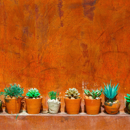 Cacti are, like, actually really cool