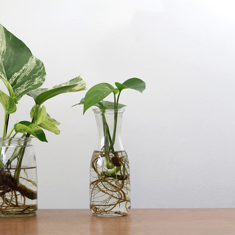 Introduction to propagating houseplants workshop