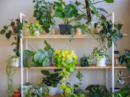 The do's and don'ts of caring for your houseplants this winter