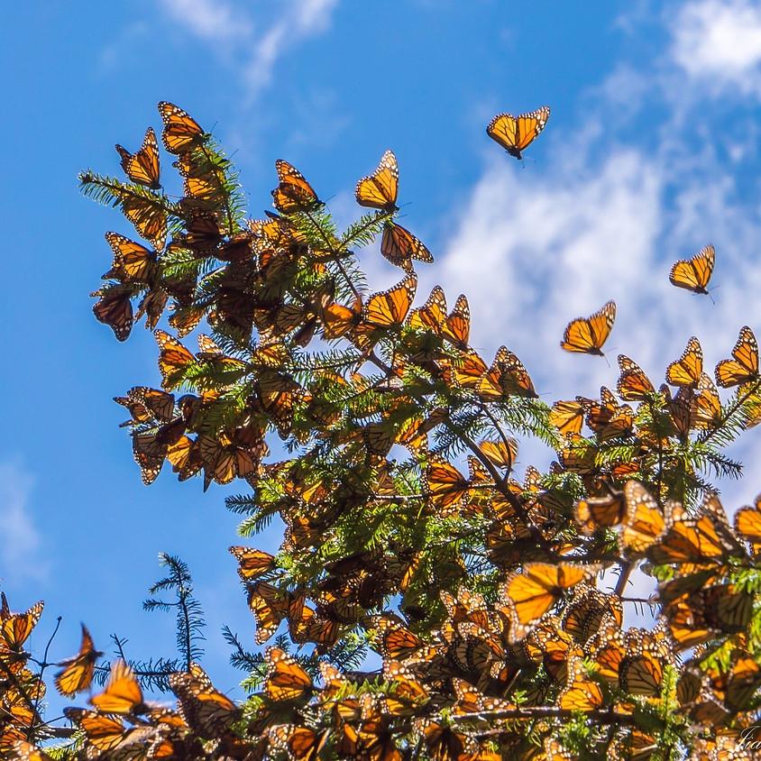 Monarch Butterfly Workshop