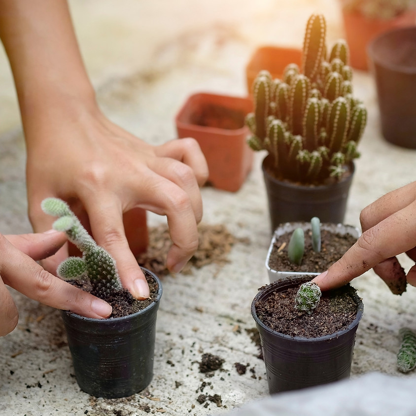 Advanced houseplant propagation workshop