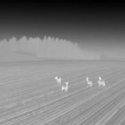 SWISS-FLY BORIS BRON