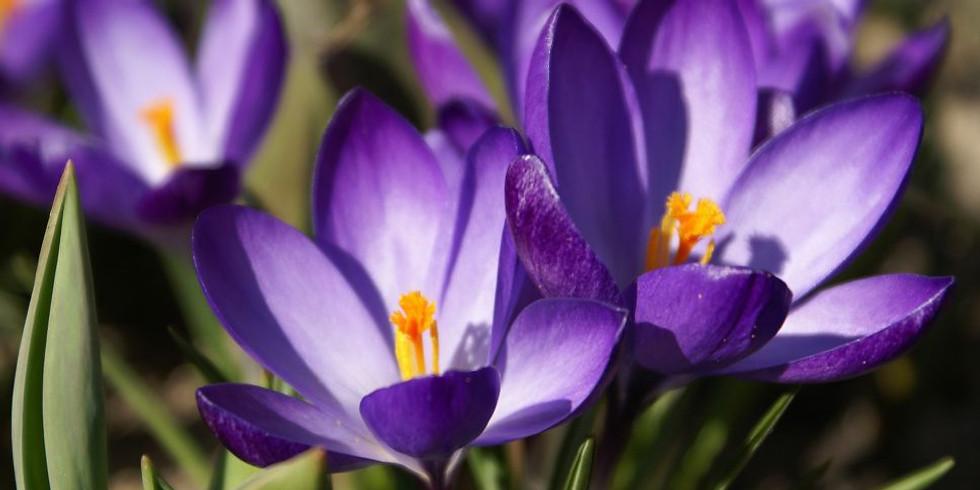 Lent/Eastertide study group