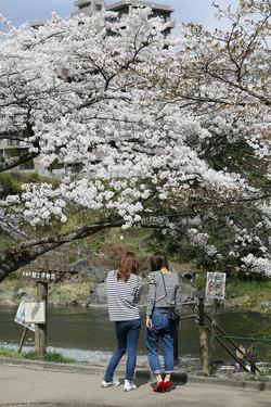 2014.4 東京都青梅市