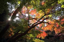 2018年11月 東京都国分寺市
