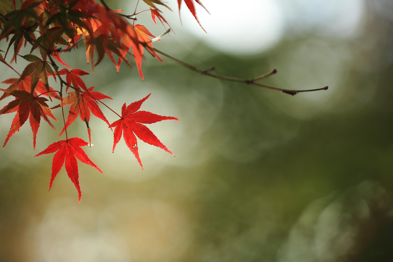 2018年11月 東京都青梅市