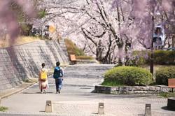 2018年4月 埼玉県飯能市