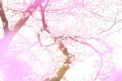 2017年4月  東京都青梅市