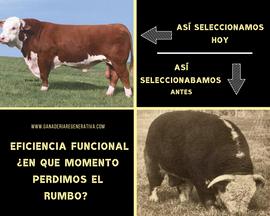 EFICIENCIA_FUNCIONAL_Â¿EN_QUE_MOMENTO_PE