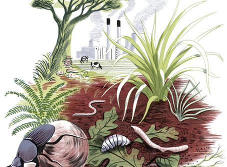 Mitigar el cambio climático con los pies en la tierra