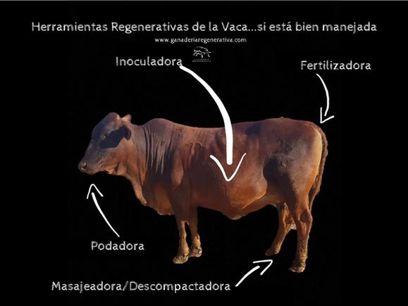 Herramientas regenerativas de la vaca.pn