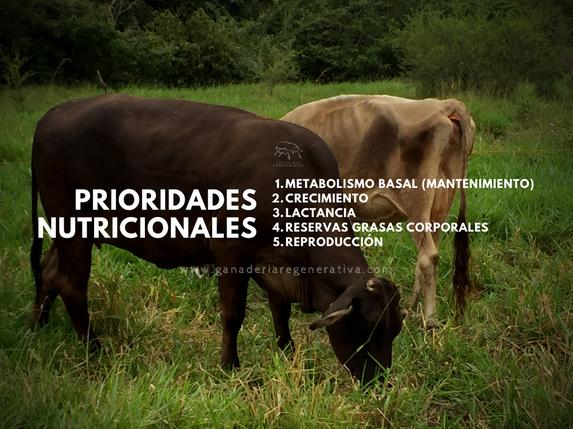 Prioridades nutricionales de la vaca.png