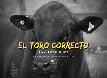 El Toro Correcto