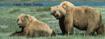 bear spray rental in Yellowstone National Park