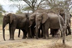 Africa.Elephants.jpg