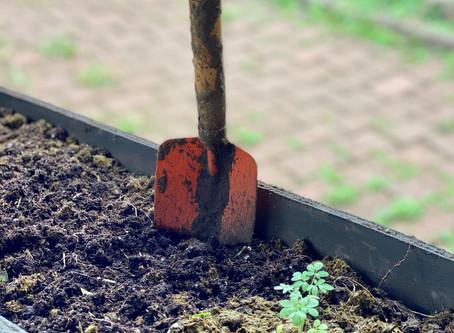 Nos estamos preparando: Jardines