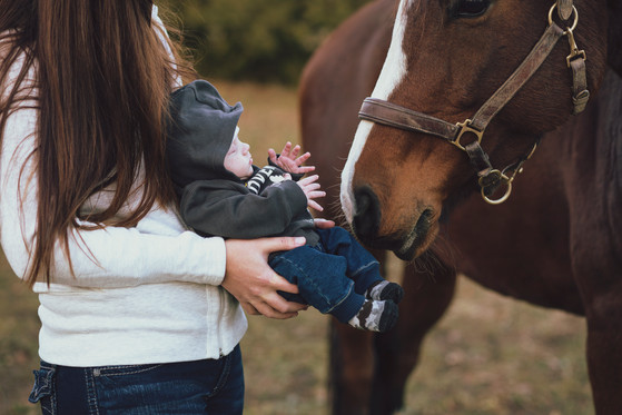 Family Equine photography