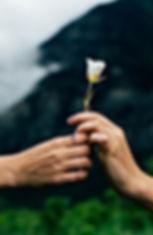 flower passing.jpg