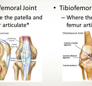Understanding Knee Mechanics