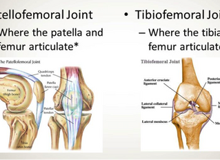 Understanding Knee Mechanics