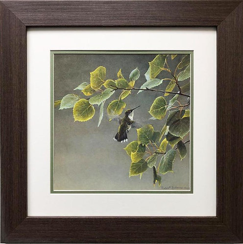 "Robert Bateman ""Female Ruby Throated Hummingbird"" FRAMED Art"