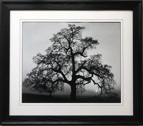 "Ansel Adams ""Oak Tree Sunset"""