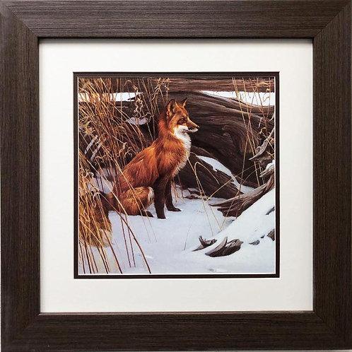 "Robert Bateman ""Wily and Wary- Red Fox"" CUSTOM FRAMED Art"