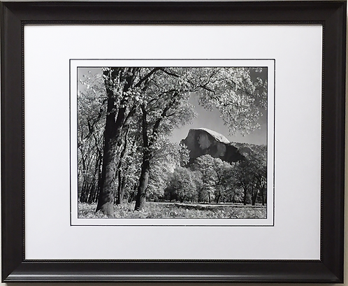 "Ansel Adams ""Half Dome Oak Trees Autumn"""