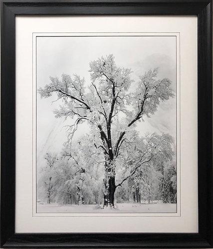 "Ansel Adams ""Oak Tree Snowstorm"" Custom Framed NEW lithograph ART"