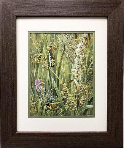 """Robert Bateman """"Cattails, Fireweed & Yellow Throated Hummingbird"""" FRAMED Art"""