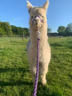 Come by and meet some of our lovely paca