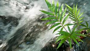 Recursos hídricos no futuro: problemas e soluções