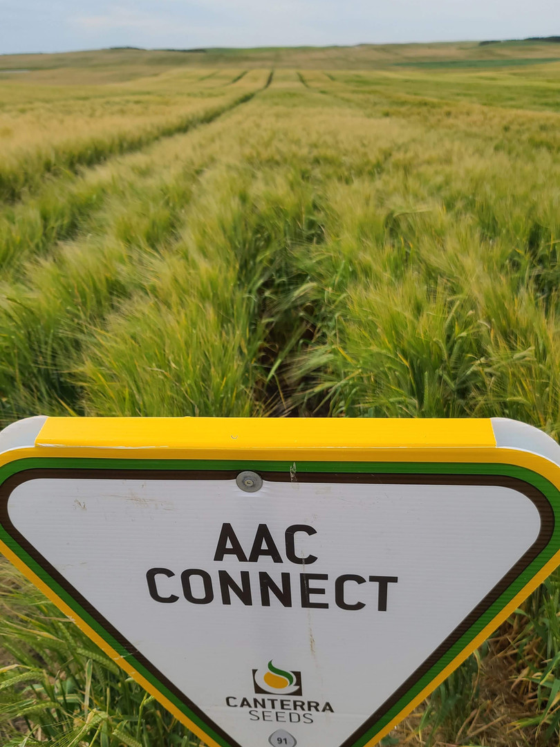 AAC CONNECT