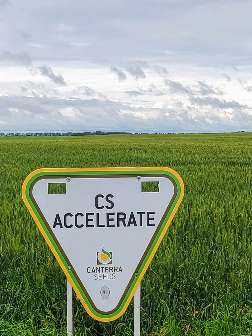 CS ACCELERATE