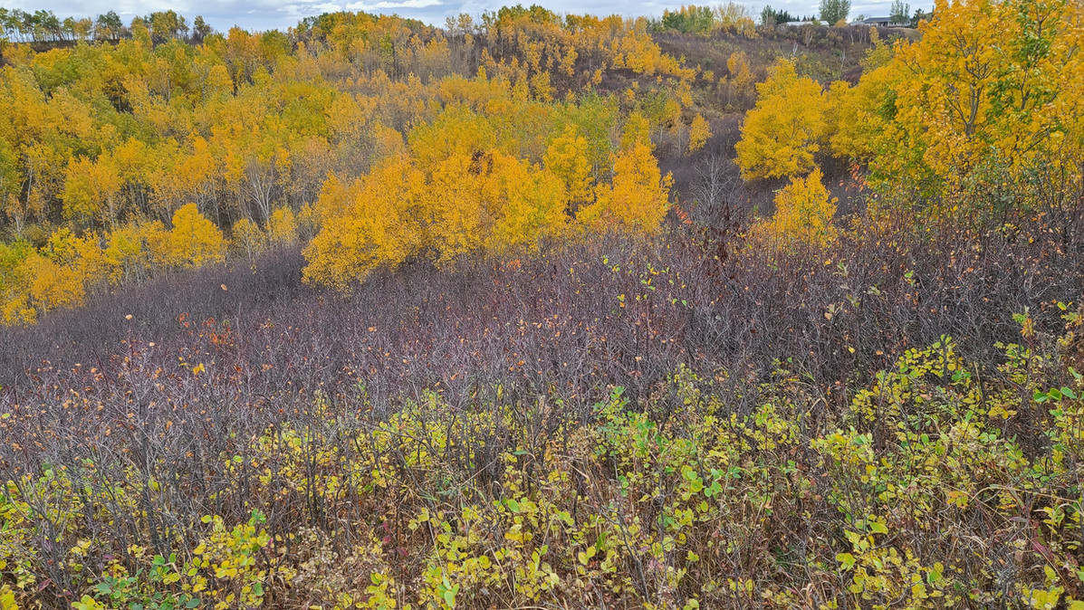 The north Saskatchewan river Bank fall 2020.
