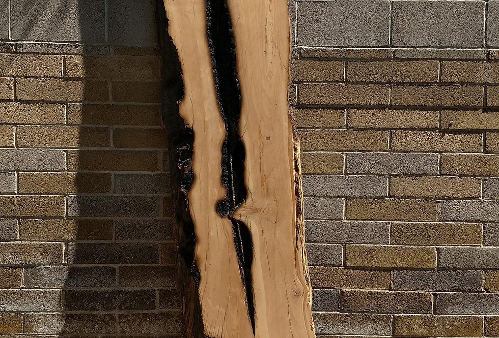 reclaimed wild fire alligator juniper slabs